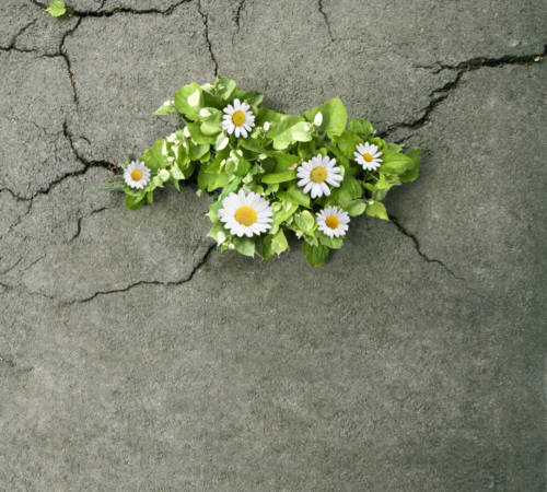 cement-flowers